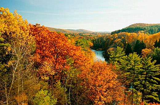 Fall foliage along the Connecticutt River near Turners Falls, Massachusetts. Facing South. USA : Stock Photo