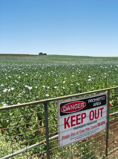 Warning notice on farm gate, Tasmanian poppy industry, Australia. : Stock Photo