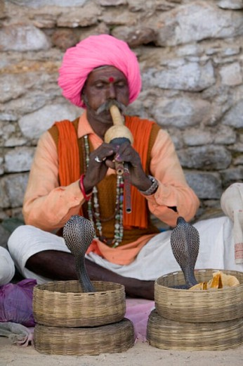 Indian Snake Charmer with Cobras. Pushkar camel fair. Pushkar. Rajasthan. India. : Stock Photo
