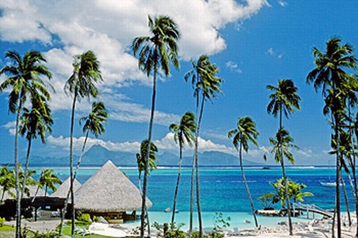Stock Photo: 1566-261836 Tahiti, French Polynesia