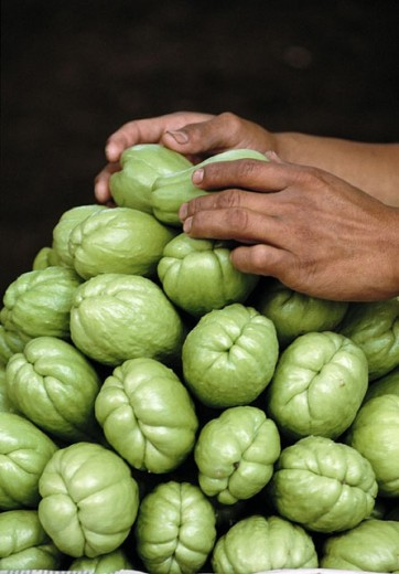 Chayote (Sechium edule), Mexico : Stock Photo