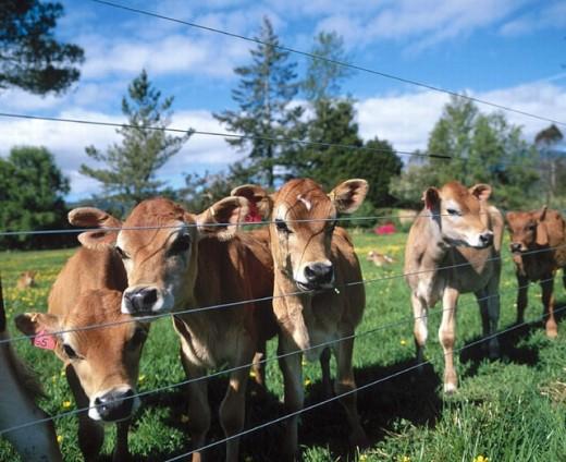 Stock Photo: 1566-268493 South Island, New Zealand