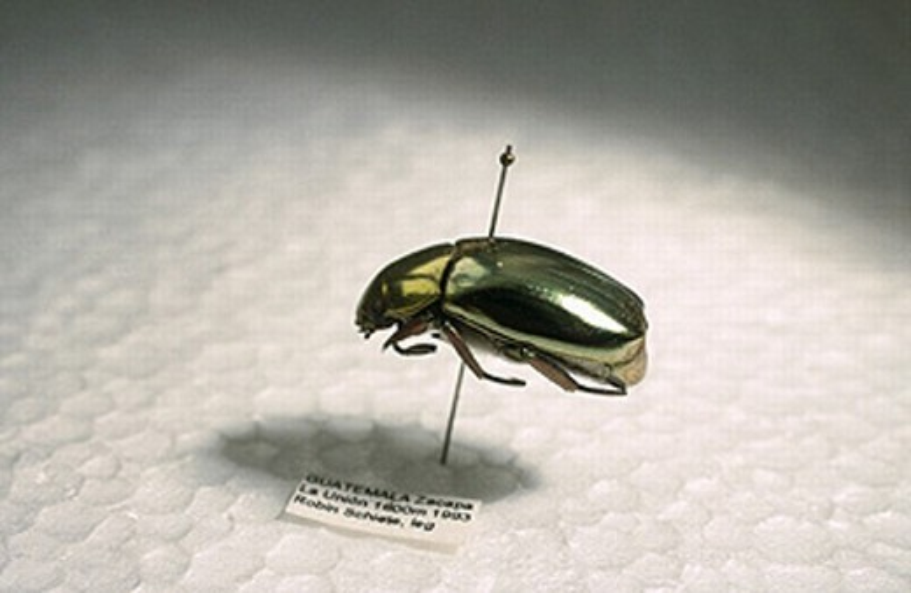 Instituto de Investigación de Recursos Biológicos Alexander von Humboldt. Villa de Leyva, Colombia : Stock Photo