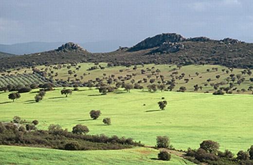 Stock Photo: 1566-272120 Near Peñarroya, Cordoba province, Spain