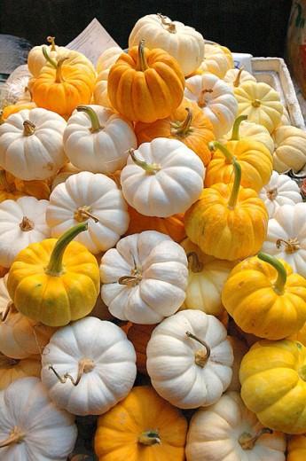 Stock Photo: 1566-275907 Pumpkins. China Town, Bangkok. Thailand