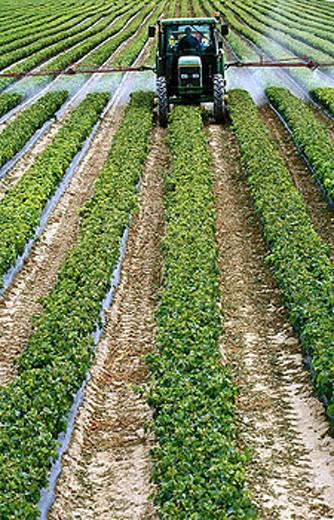 Stock Photo: 1566-276253 Dusting vineyards