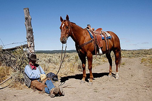 Stock Photo: 1566-278419 Cattelman with ´Quarter horse´ and/or ´Paint´ of USA. Ponderosa Ranch. Seneca. Oregon . USA