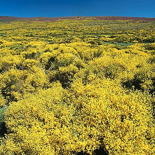 Parque Natural del Lago de Sanabria, Zamora province, Castile-Leon, Spain : Stock Photo