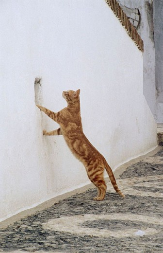 Stock Photo: 1566-281809 Cat. Sevilla. Spain