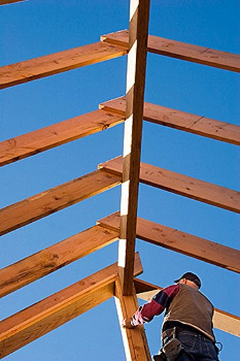 Carpenter standing under roof rafters during the framing of a roof at a construction site. : Stock Photo