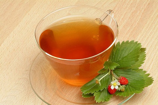 Stock Photo: 1566-291158 Wild Strawberry (Fragaria vesca) infusion