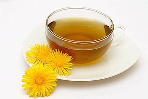 Stock Photo: 1566-293801 Medicinal plant, common Dandelion, Tea. Taraxacum officinale.