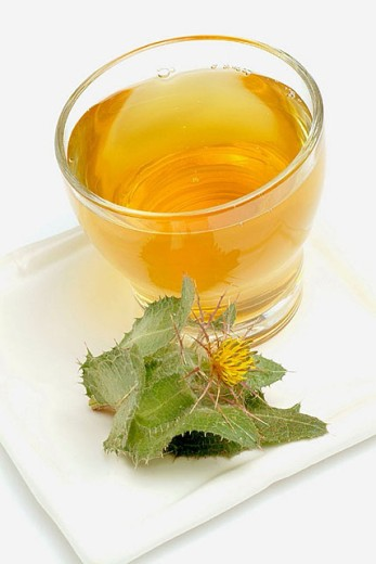 Stock Photo: 1566-295165 Blessed thistle (Cnicus benedictus) tea.