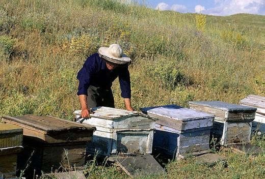 Beekeeping, Garni. Armenia : Stock Photo