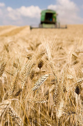 Agricultural machinery. Combine harvester on field of wheat. ´Learza´ estate. Near Estella, Navarre, Spain : Stock Photo