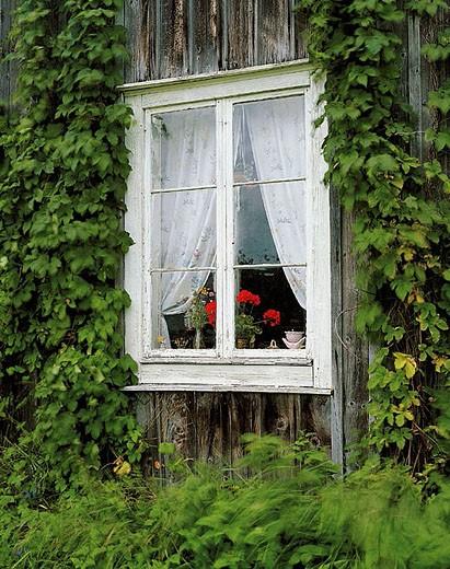 Window. Häggvik. Ångermanland. Sweden. : Stock Photo