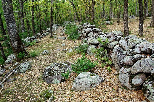 Stock Photo: 1566-318981 Bosque de Transás. Pirineo Aragonés. Huesca province. Spain.