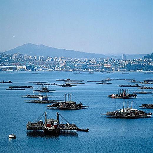 Stock Photo: 1566-321643 Bateas (mussel platforms). Ria de Vigo (estuary). Galicia, Spain