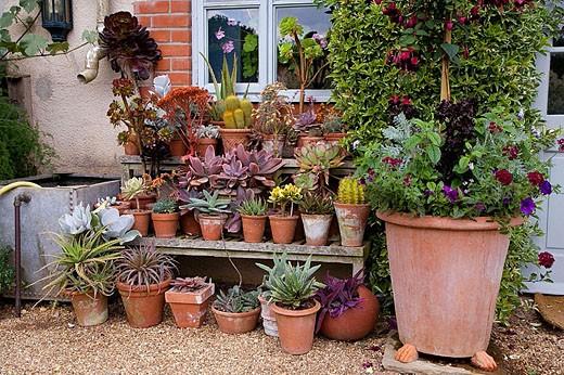 Cacti Garden Still Life : Stock Photo