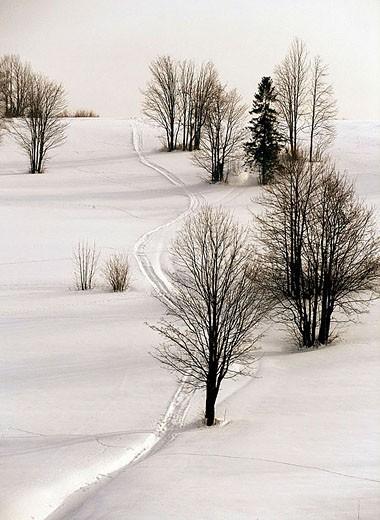 Winter scene : Stock Photo