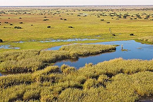 Flight over Bangweuleu marshes. Zambia. : Stock Photo