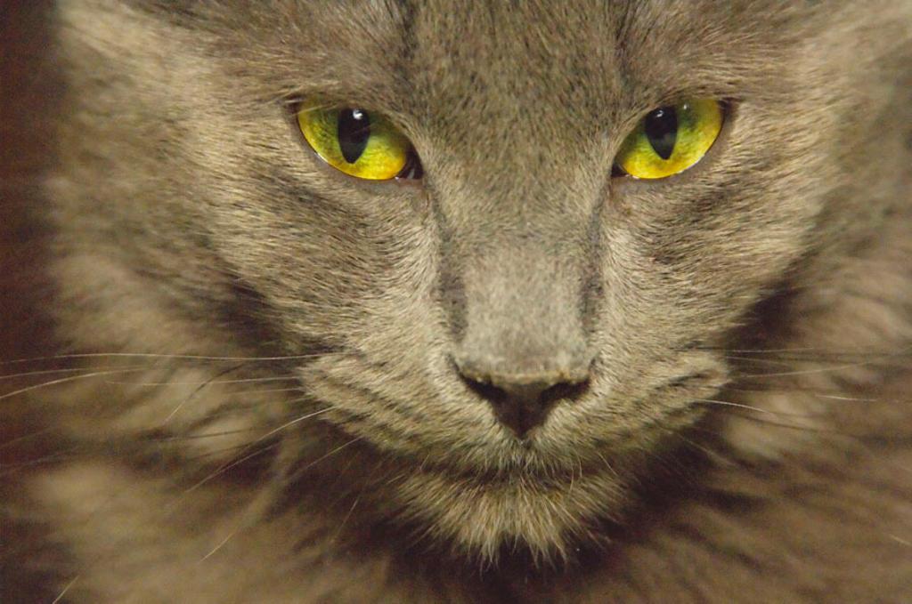 Domestic cat. : Stock Photo