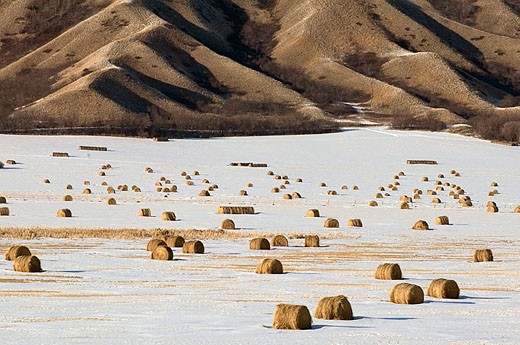 Qu´Appelle River Valley with light snow and hay bales. Saskatchewan, Canada : Stock Photo