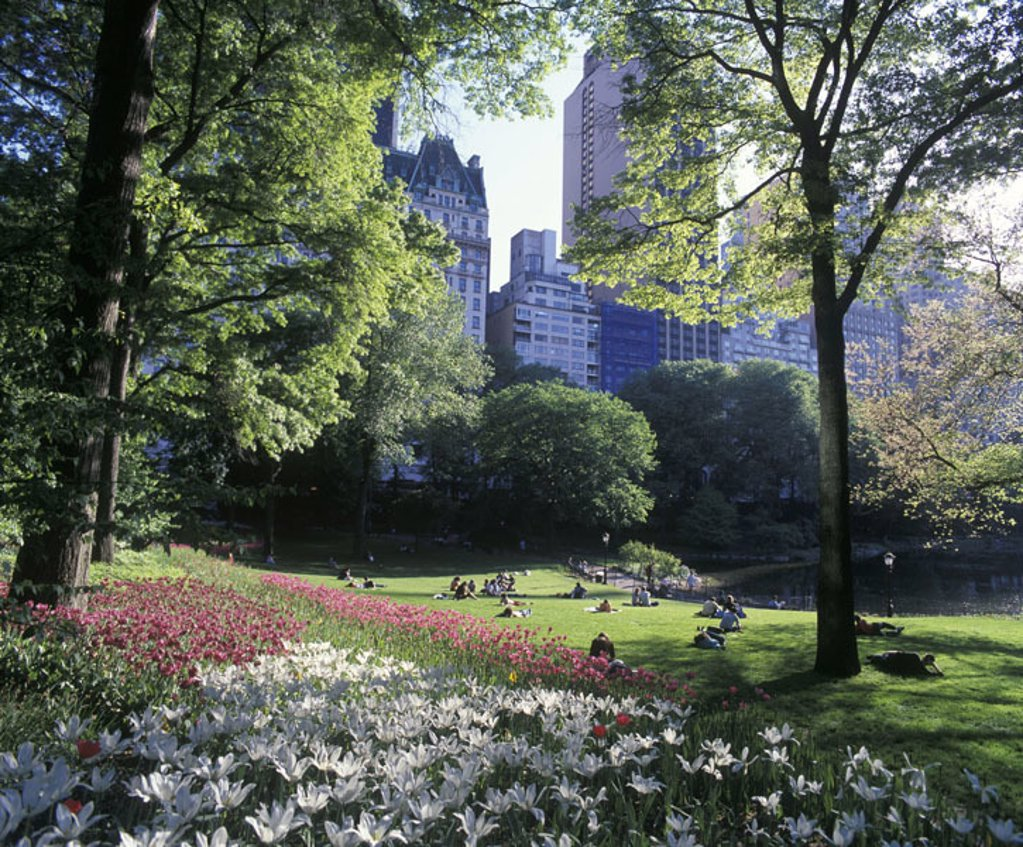 Stock Photo: 1566-342538 Spring flowers, Central park, Manhattan, New York, USA.