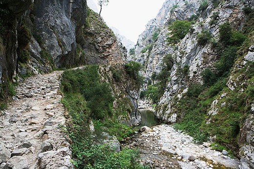 Cares River gorge. Picos de Europa´ National Park. Asturias. Spain : Stock Photo