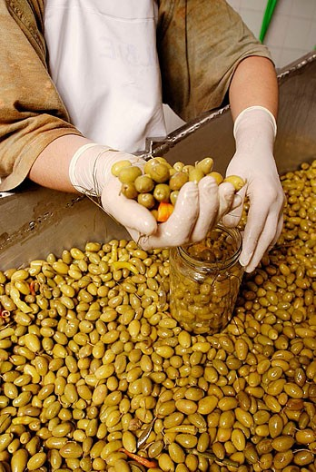 Woman packing olives. Mediterranean Foods. Spain. : Stock Photo