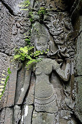 Stock Photo: 1566-345149 Ta Prohm temple, mid XIIth century, early XIIIth century AD. Buddhist. Temples of Angkor. Siem Reap area. Kingdom of Cambodia.