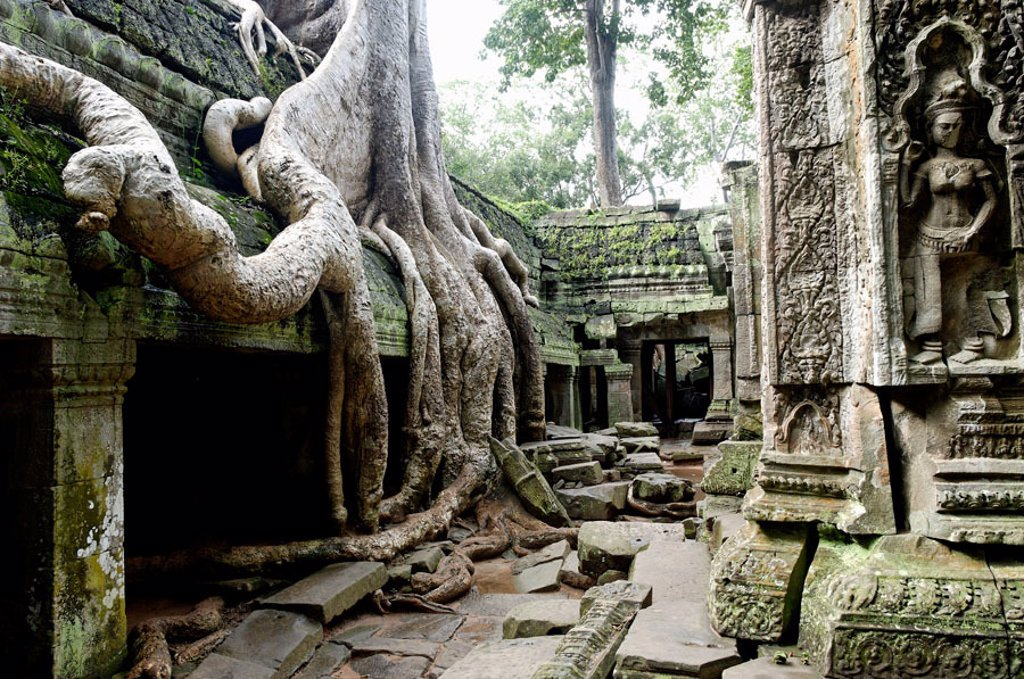 Stock Photo: 1566-345641 Ta Prohm temple, mid XIIth century, early XIIIth century AD. Buddhist. Temples of Angkor. Siem Reap area. Kingdom of Cambodia.