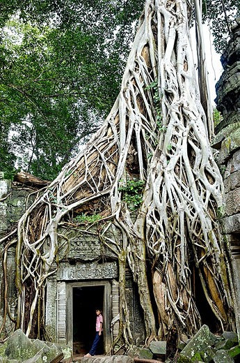 Stock Photo: 1566-345648 Ta Prohm temple, mid XIIth century, early XIIIth century AD. Buddhist. Temples of Angkor. Siem Reap area. Kingdom of Cambodia.