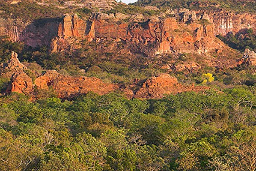 Red sandstone cliffs, Cerrado tropical savanna ecoregion, Piauí, Brazil : Stock Photo