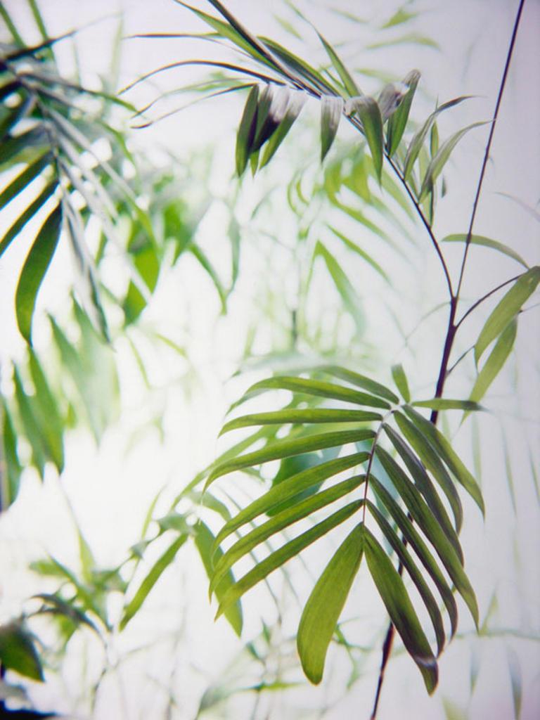 Green Fern : Stock Photo