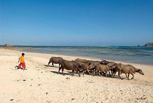 Kuta beach in South Lombok. Indonesia : Stock Photo