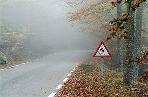 Foggy road. : Stock Photo