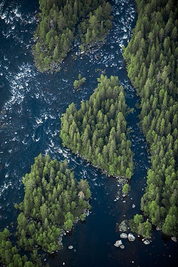 River rapid in forest area, aerial view. Vindel River. Lappland. Sweden : Stock Photo
