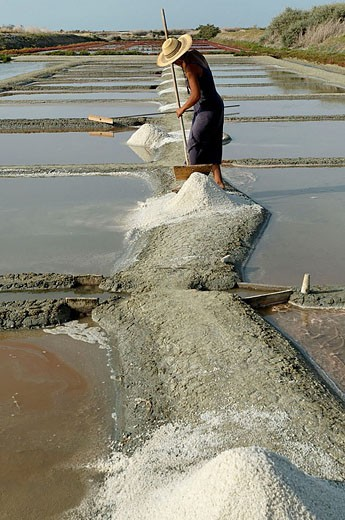 Collecting salt in the salterns. Marsh of Le Fier d´Ars. Ré Island. Charente Maritime. France. : Stock Photo
