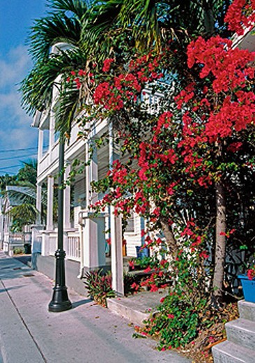 flowers on street in key west : Stock Photo