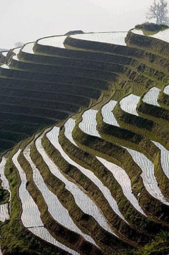 Stock Photo: 1566-356087 Longsheng terraced rice fields. Guilin. Guangxi Province. China.
