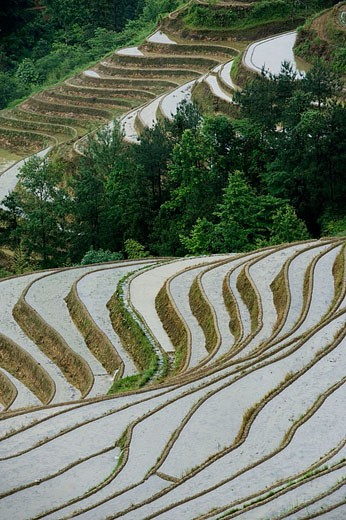 Terraced rice fields. Guilin. Longsheng. Guangxi Province. China. : Stock Photo