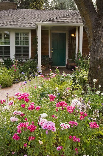 Stock Photo: 1566-357292 Brick walk to front of home framed by Farewell to Spring [Godetia grandiflora]. Heath, Medford. Oregon. USA