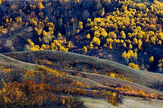 Stock Photo: 1566-357403 Qu´Appelle Valley- aspens on valley slopes