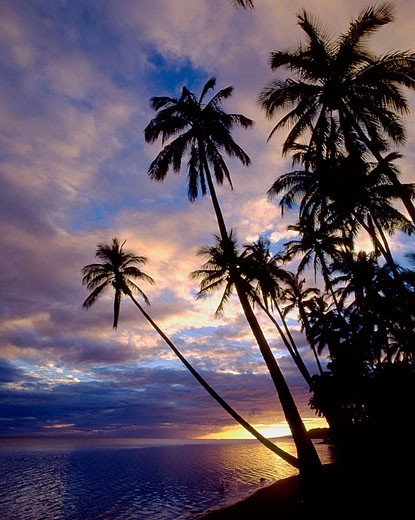 U.S.A., Hawaii, Molokai, Kapuaiwa, coconut palm grove, beach, sunset : Stock Photo