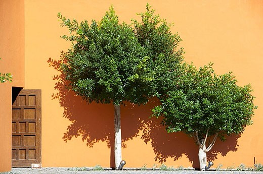 Typical Andalusian courtyard with orange trees. Sevilla, Andalusia, Spain. : Stock Photo