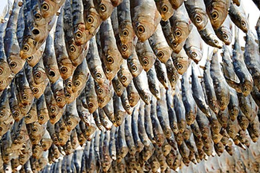Stock Photo: 1566-370811 Drying fish. Cha-am. Thailand