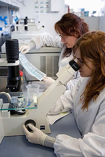 Counting cells, Neubauer chamber, culture room, biopharmaceutical lab, development and production of innovative drugs using adult stem cells, Cellerix, Grupo Genetrix, Madrid : Stock Photo