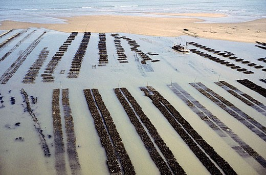 Stock Photo: 1566-381467 Oyster bed. Aerial view. Island of Oléron. Charente-Maritime province. Atlantic Coast. France.