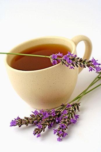 Lavender Tea (Lavanda officinalis) : Stock Photo